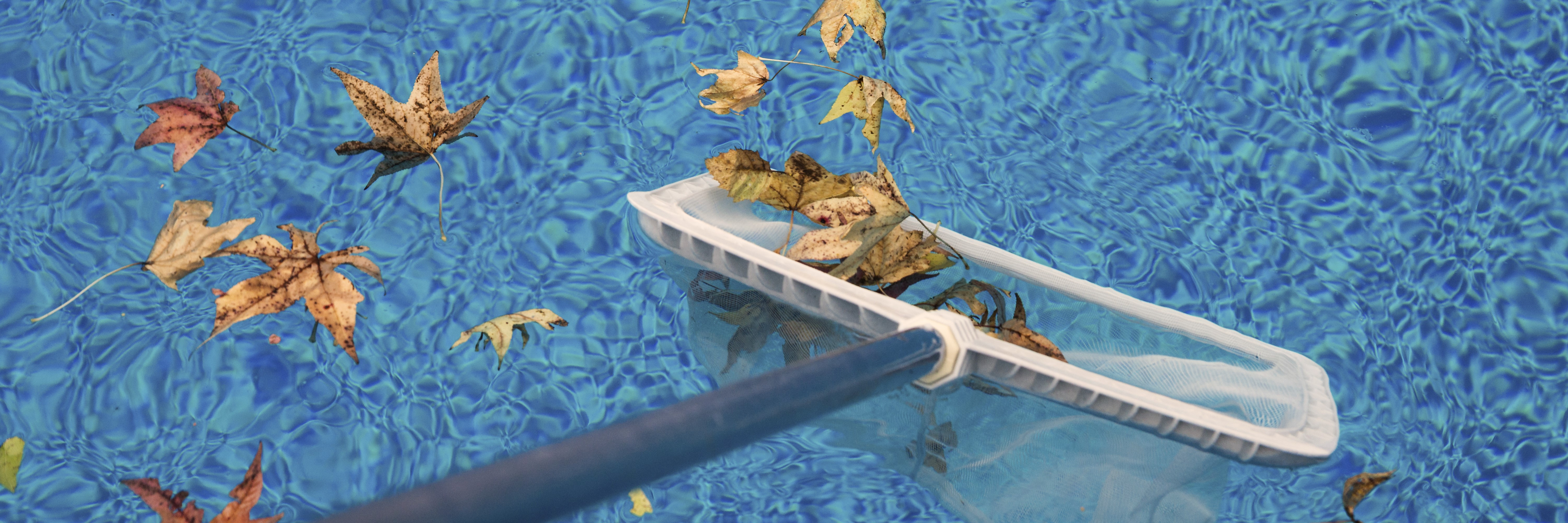 skimming leaves on a pool